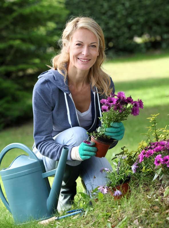 beautiful mature woman planting purple flowers