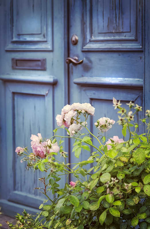 blue front door and pink roses