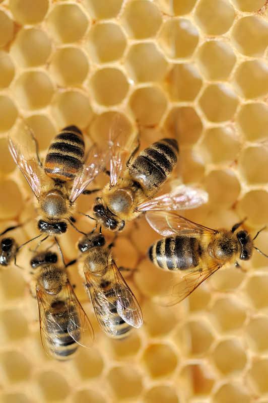 honeybees on beeswax | 8 Ingredients in Lip Balm & Cosmetics That Cause Allergies | Masterpiece Skin Restoration