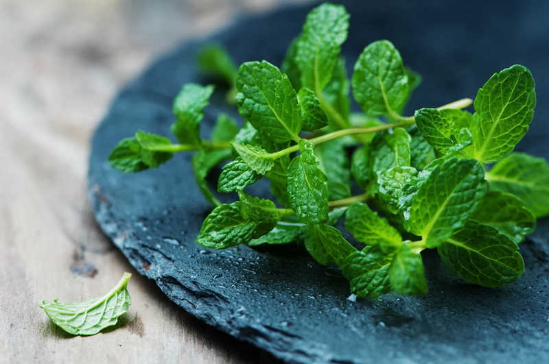 Fresh green mint on the wooden table, selective focus | Fresh green mint on the wooden table, selective focus