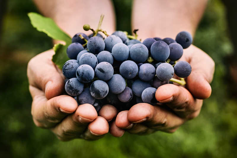 hands holding grapes | 13 Low Cost (& No Cost!) Beauty Tips for Skin | Masterpiece Skin Restoration