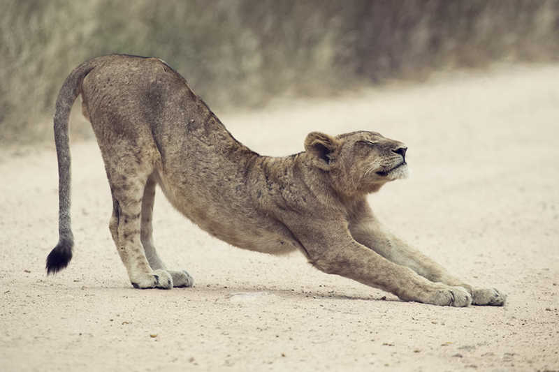 lioness stretching | Great Works of Art Get Restoration! You Can Too! | Medical Beauty | Masterpiece Skin Restoration